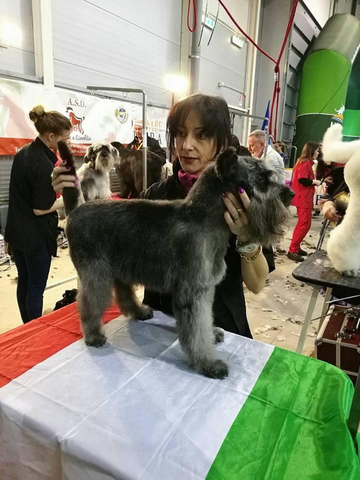 Toeletta Cani | Lavaggio Cani | Amore per gli Animali | Passione per gli Animali | Lavora con gli Animali | Professionista Toelettatore | Toelettatori Roma | Accademia Toelettatori | Corsi per Toelettatori | Diventare un Toelettatore Professionista | Roma | San Giovanni