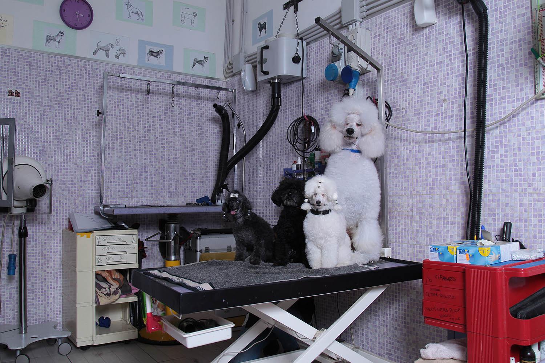Toeletta Cani   Lavaggio Cani   Amore per gli Animali   Passione per gli Animali   Lavora con gli Animali   Professionista Toelettatore   Toelettatori Roma   Accademia Toelettatori   Corsi per Toelettatori   Diventare un Toelettatore Professionista   Roma   San Giovanni